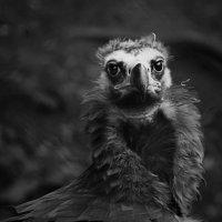 Калининградский зоопарк :: Ирина Каткова