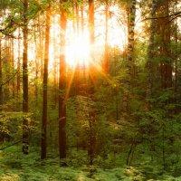 Сибирские джунгли :: Дмитрий Николаев