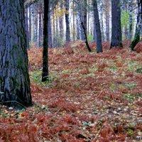 Октябрьский лес :: Виктория Чагина