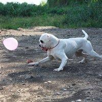 Бади и шарик :: Екатерина Чернова