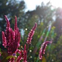 flowers :: екатерина янина