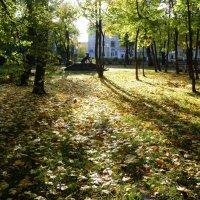 Солнце в парке :: Екатерина Тумовская