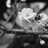 весна) :: Татьяна Горлова