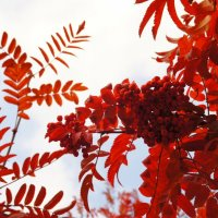 Осень :: Екатерина Сергиенко