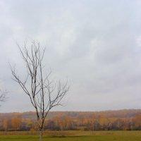 Одиночество :: Любовь Шихова