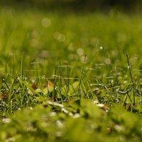 Осенние паутинки :: Валерия заноска