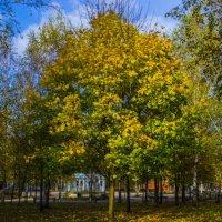 осень 2 :: Павел Данилевский