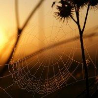 Сотканное утром :: Валерия заноска