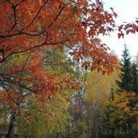 осень в сквере :: Наталья Золотых-Сибирская