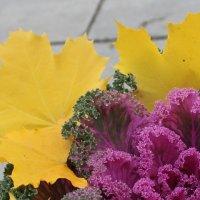 Капуста в листьях клёна :: Наталья Золотых-Сибирская