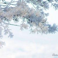 Зима в Сибири :: Екатерина Березина