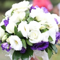 Каждому цветку по паре :: Светлана Тихонова