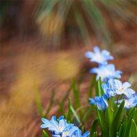 Цветы - остатки Рая на земле :: Анастасия Ласская