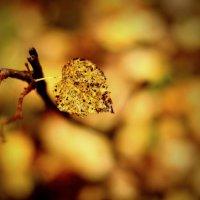 осень :: Борис boriska_