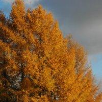 Осень :: Натали V