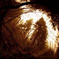 лес :: Ярослав Макеев