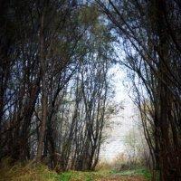 Осенняя дорога :: Светлана Череш