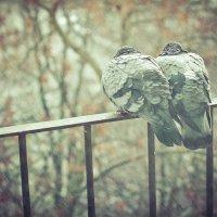 Двое наперекор стихии :: Евгения Валиева