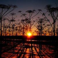 Marsian Sunset :: Алекса Чачина