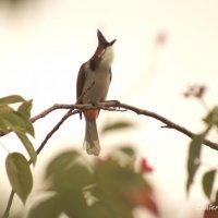 Экзотические птицы :: Екатерина Березина