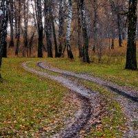 Осенняя дорога :: Любовь Шихова