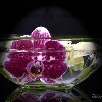 Орхидеи :: Екатерина Березина