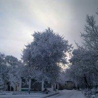 Зима 2012. :: Марина Коломиец