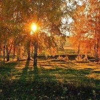 Сквозь золото листвы :: Виктор Ковчин