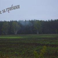 по дороге за грибами :-) :: Yulia Golub