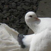golub :: armen khachatryan