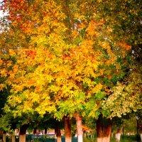 Заглянула осень в сад... :: Ораз Тулешов