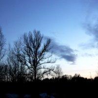 гармония природы :: Светлана Тихонова