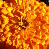Цветы :: John Becksword