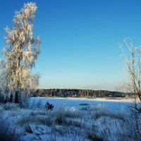 Берёзовой красы зима :: Александр | Матвей БЕЛЫЙ