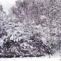 Снежит :: Юрий