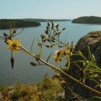 Ладожский цветок :: Владимир Федорчук