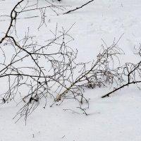 Бредут.... к Весне :: Александр Садовский
