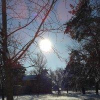 мороз и солнце,день чудесный! :: Юлия Закопайло
