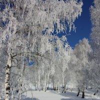 Мороз-кудесник. :: Наталья Юрова