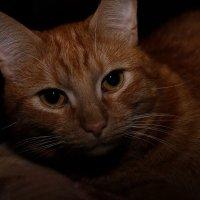 мой кот. :: Артем Михайлов