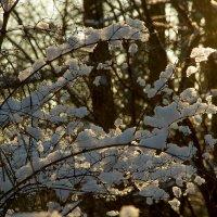 Первый снег. :: Валентин Яруллин
