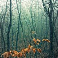 В тёмно-синем лесу... :: Ольга Мальцева