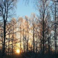 морозное утро :: Александр Арсеньев