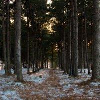 Дорожка в лесу :: Тамара Морозова