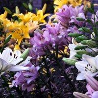 цветы :: Степан Юферев