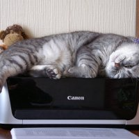"""CANON""- даже cat can! :: Александр Борисович Панченко"