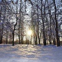 Зимний лес :: Ирина Лебедева