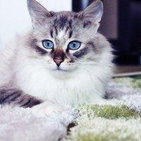 Мой красивый котик) :: Амина Мухамедзянова