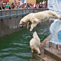 Прыжок медведя :: Nn semonov_nn