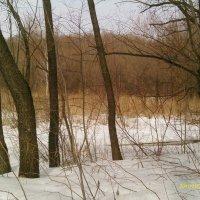 Зима, Серебряный бор :: gor4inka Koryagina